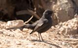 Birdtrip to Israel 2017