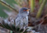 Birdtrip to the Mallorca 2018