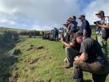 Birds in Azores - Birders in Action