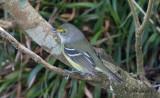 Birdtrip to the Azores 2018