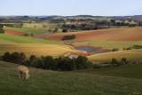 Thorpdale Farmland