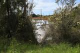 Farm Dam