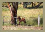 Next-doors baby foal.