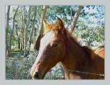 The foal from next-door