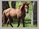 Merlin (the foal)  from next-door
