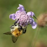 making a buzz