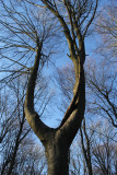 66:365Wish Bone Tree