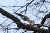 1. Squirrel in action
