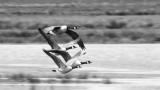 15. Flying Canda Geese