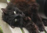 137:365Highgate Cemetery Cat