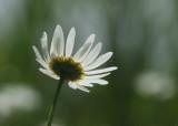 166:365array of petals