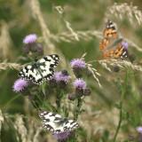 187:365butterflies in abundance