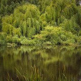 Pond - Finlay NSW