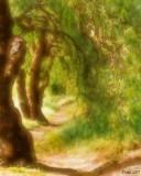 Grove of Pepper Trees