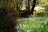 Spring Flowers - Eltham
