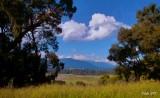 Late Summer - Yarra Valley I