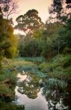 Blackburn Lake Wetlands