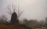 Fog on the Siding Spring Road