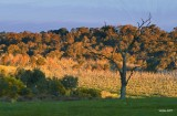 Late Afternoon on the Panton Hill road