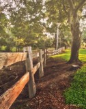 The Old Lake Fence