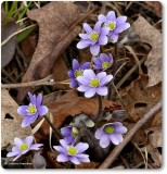 Plants of the Reveler Conservation Area