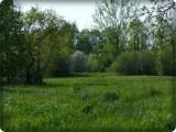Reveler  in spring
