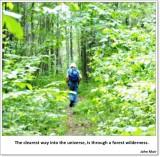 #12: Forest wilderness