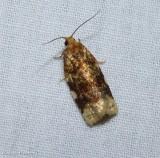 Fruit-tree leafroller moth (Archips argyrospila), #3648