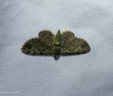Green pug moth  (Pasiphila rectangulata), #7625