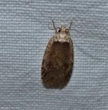 Twirler moth (agonopterix clemensella), #0862