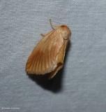 Early button slug  (Tortricidia testacea), #4652
