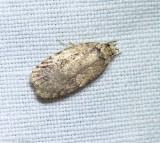 Twirler moth (Depressariinae)