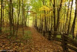 Along the Bruce Trail