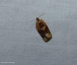 Red-banded leafroller moth  (Argyrotaenia velutinana),   #3597