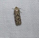 Unidentified Moths of the Reveler Conservation Area
