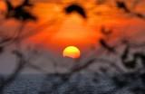 A Phi Phi Sunset