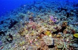 Amazing Reef, Fortunately Too Deep...
