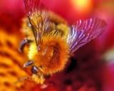 Zangao On Flower