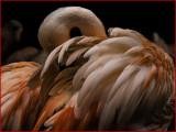 Flamingo Frolic