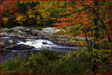 Creekside Autumn Splendor