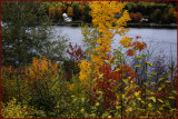 River Autumn Splendor