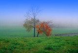 Foggy Meadow