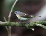 Birdtrip to Azores Oct. 2018