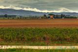2017 - Casa di Terra Winery - Bolgheri, Tuscany - Italy