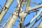 Local Patch Birds