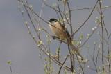 BIRDS OF INDIA / OISEAUX DE L'INDE