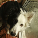 29th March 2018 - if in doubt, shove a camera in the dog's face!