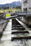 25.  The fish ladder to help salmon and steelhead continue upstream for spawning.