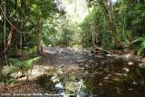 Forest creek in Daintree