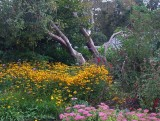 Lost Gardens of Heligan.jpg